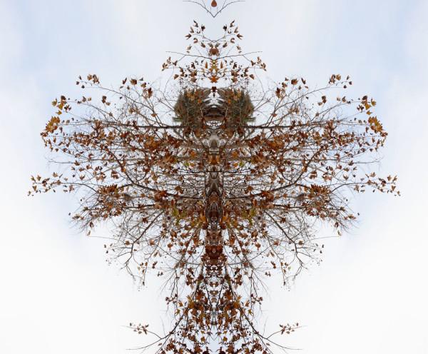 埃里斯奥利弗的树鸟