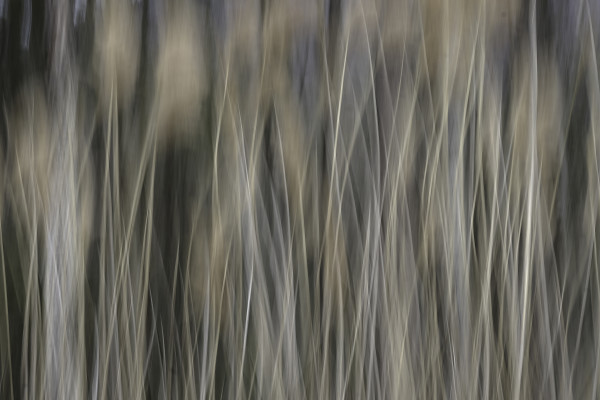Windy Reeds by Kelly Sinclair