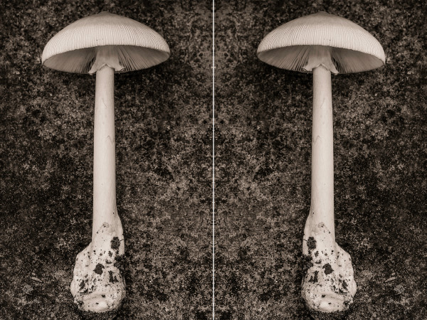amanita diptych by Kelly Sinclair