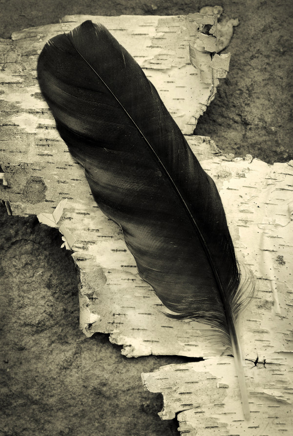 Crow feather by Kelly Sinclair