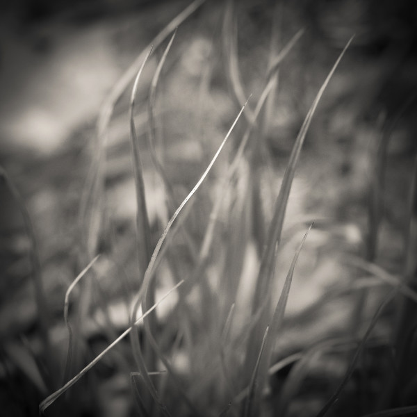 Grass, Abstract by Kelly Sinclair