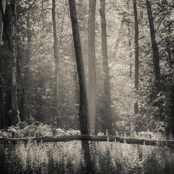 Morning light at Big Deep by Kelly Sinclair