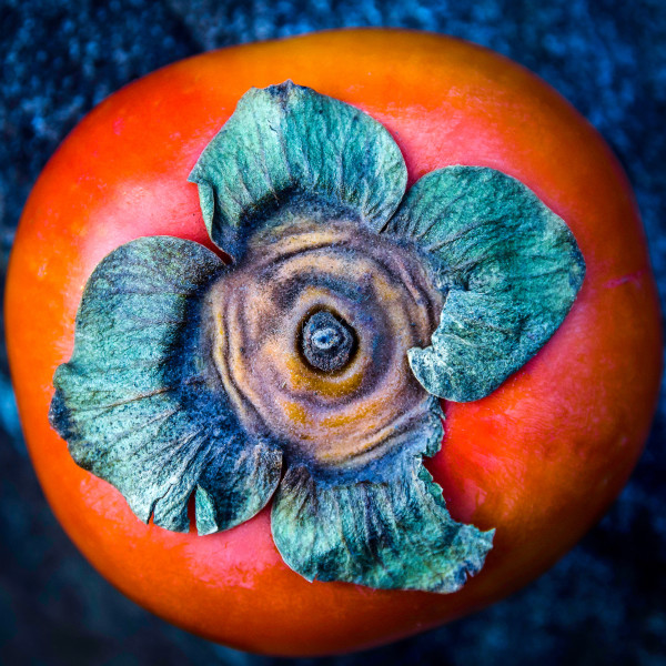 Persimmon by Kelly Sinclair