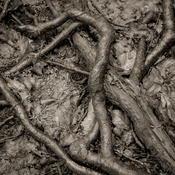 Roots by Kelly Sinclair
