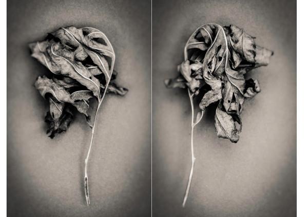 sensitive fern by Kelly Sinclair