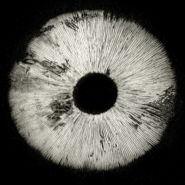 Spore print#3 by Kelly Sinclair