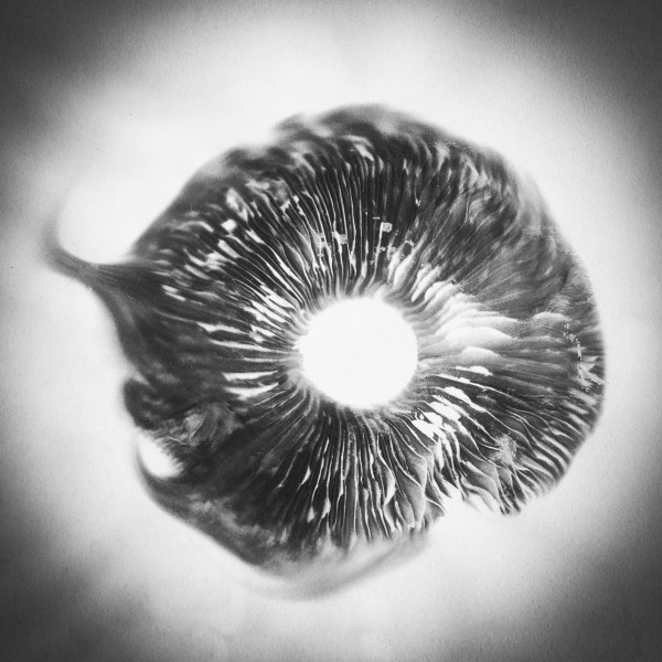 Spore print#2 by Kelly Sinclair