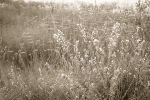 october wildflowers by Kelly Sinclair