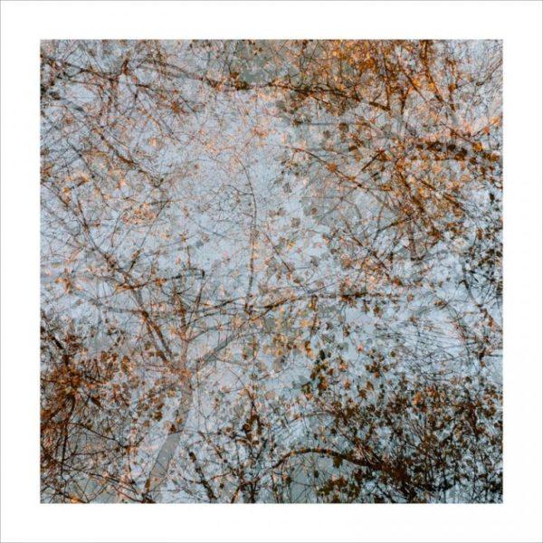 Treetops by caroline fraser