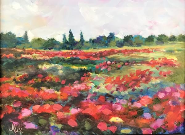 亚历山德拉·卡辛的《山谷中的罂粟花》