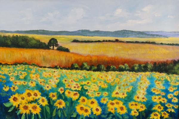 亚历山德拉·卡辛的《金色田野与向日葵》