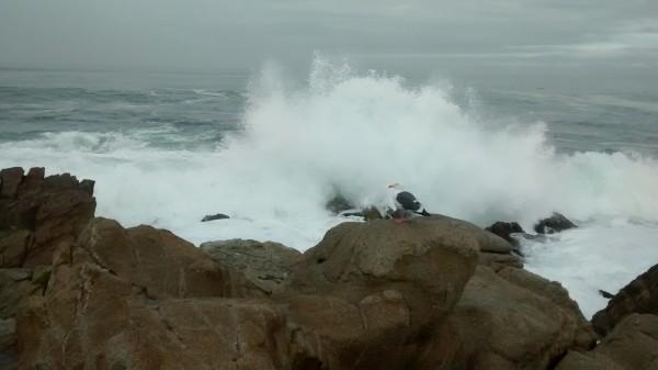Seagull's Moment Pacific Grove CA by Lori Thompson