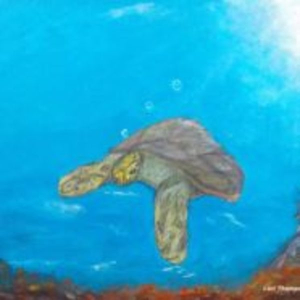 Bubbles the Turtle by Lori Thompson