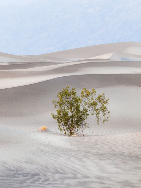 Creosote Bush, Sand, Mountains by G Dan Mitchell
