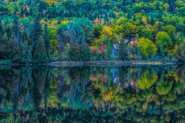 Kaleidoscope by Patricia Dennis
