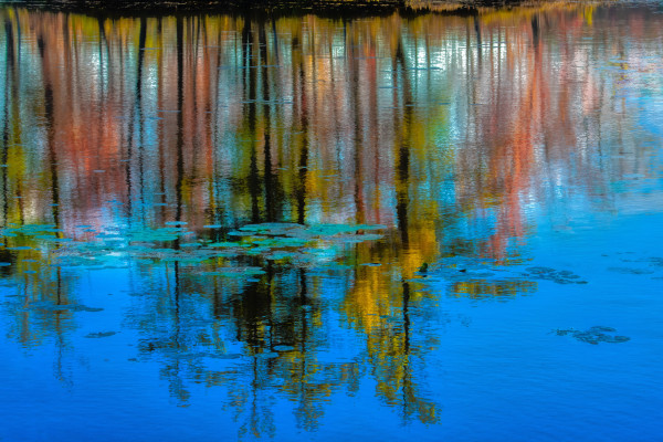 Reflections on the Pond by Patricia Dennis