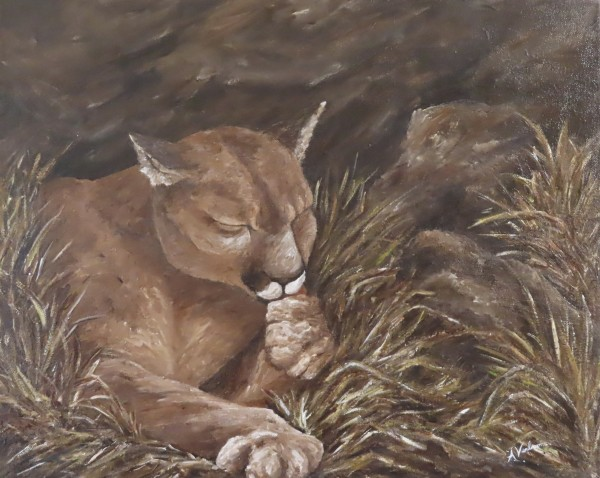 Resting Cougar by Alexandra Verboom