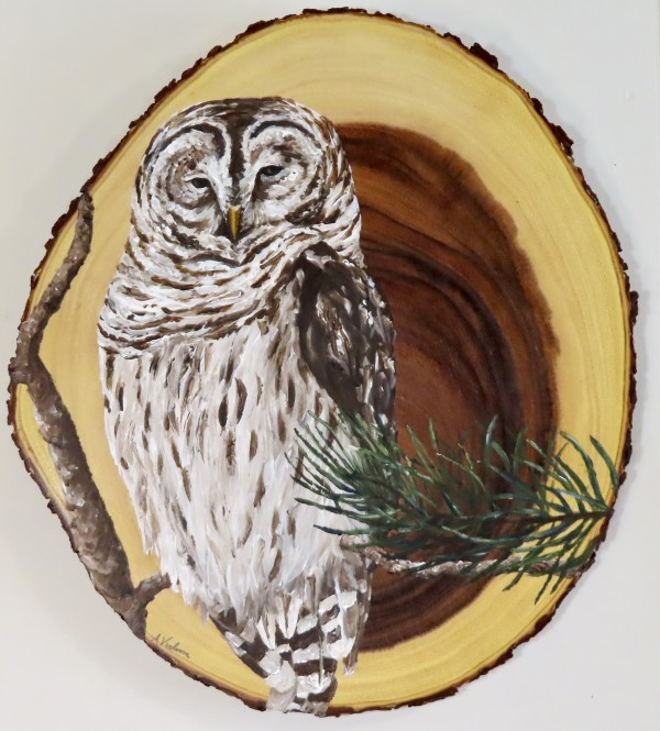 Barred Owl on Acacia Wood by Alexandra Verboom