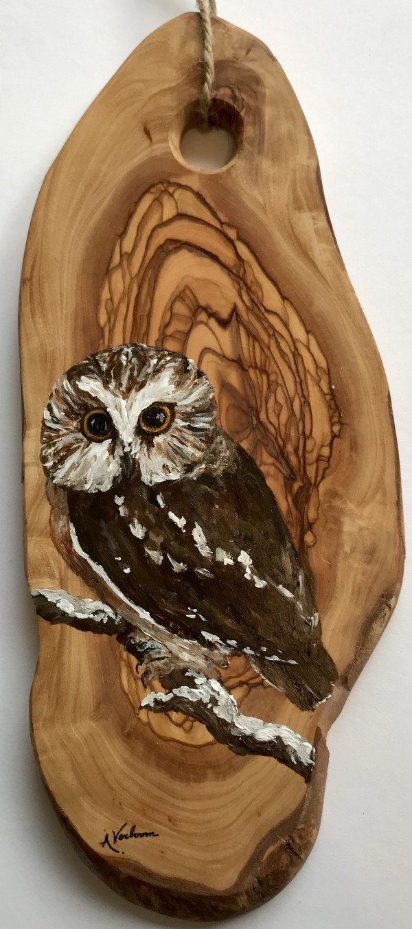 Northern Saw-Whet Owl by Alexandra Verboom