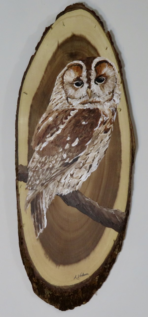 Tawny Owl on Acacia Wood by Alexandra Verboom