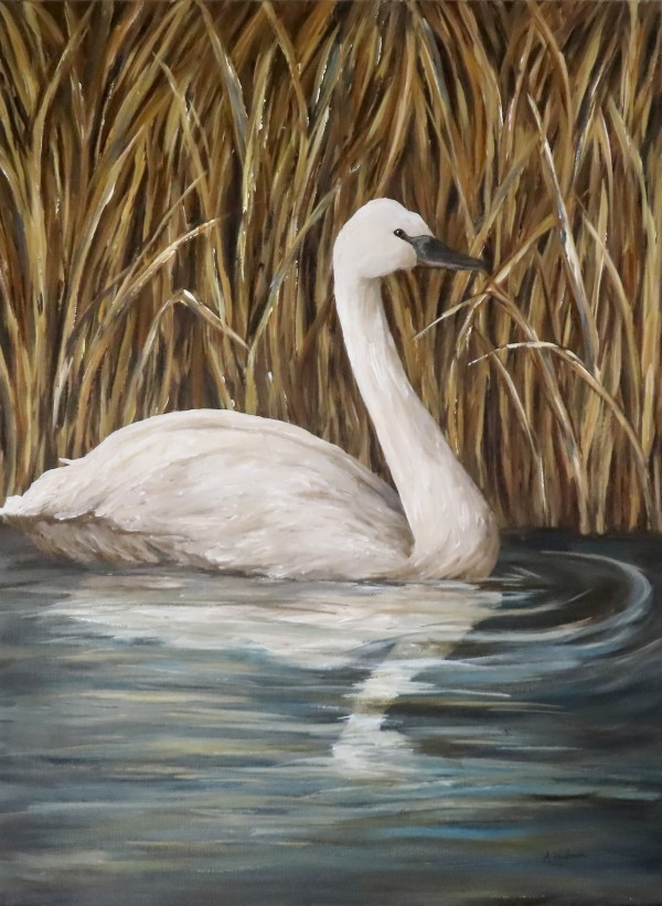 Swan Reflections 2 by Alexandra Verboom