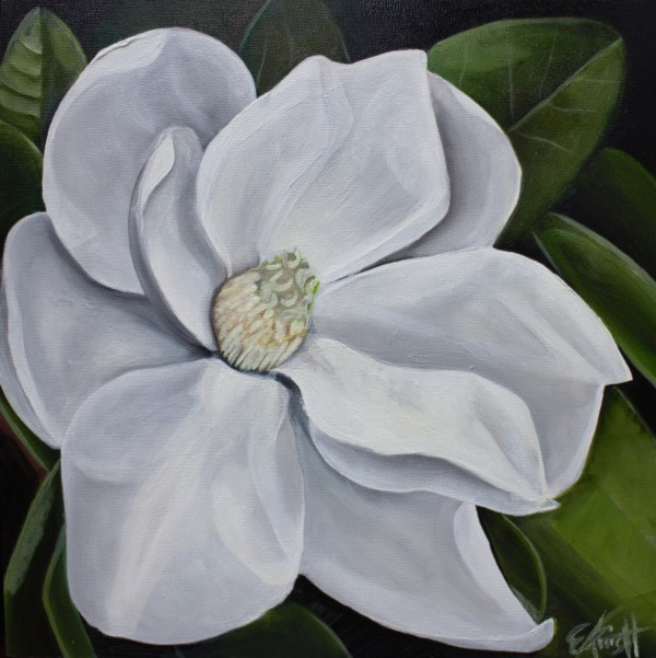 Magnolia Blossom by Emma Knight