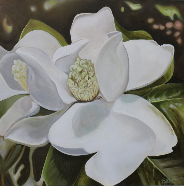 Lewis Ginter Magnolia by Emma Knight