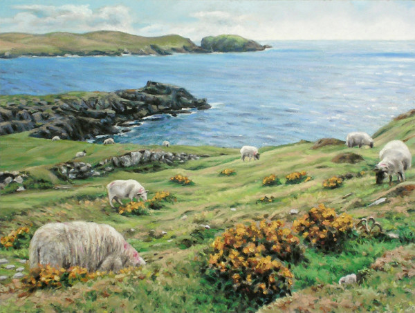Dursey Island Sheep