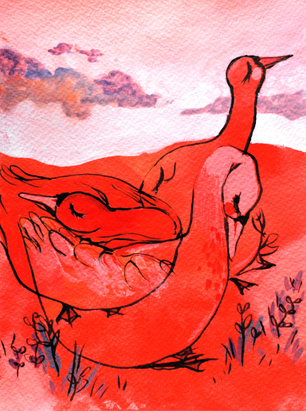 Swans in a Red Field