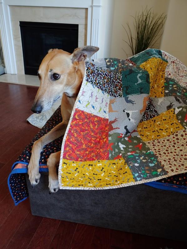 Greyhound Snuggler by Laura Brady