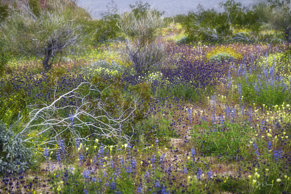 Joshua Tree Super Bloom II by Connie McClaran