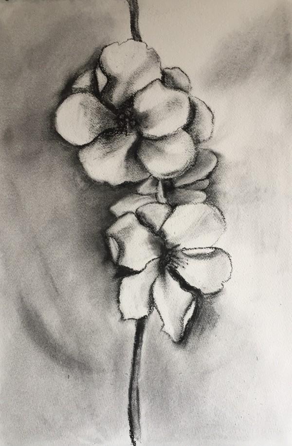 Japonica by Kirsten Johnston