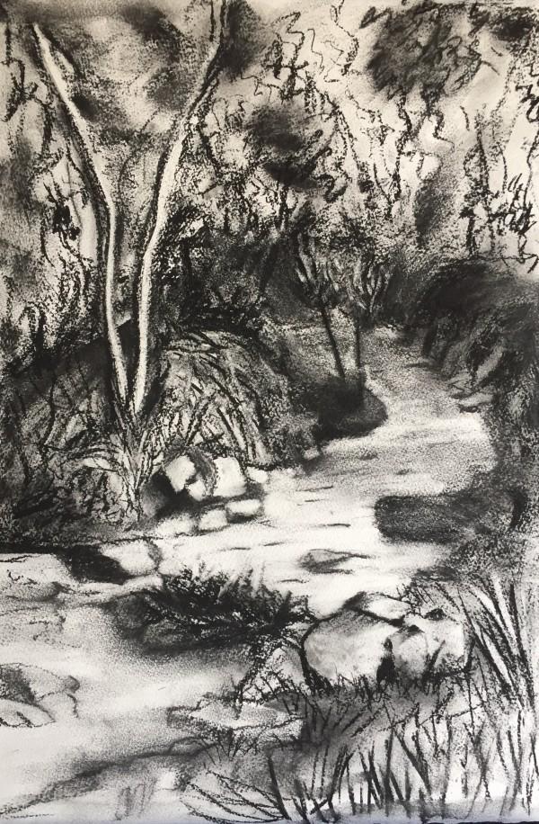 Creek behind Halls Gap, Victoria by Kirsten Johnston