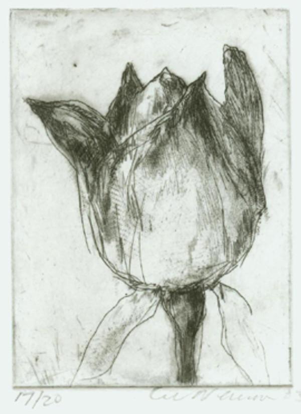 Single Flower by Lee Newman