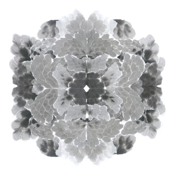 Mandala, Key 1 by Allison Svoboda