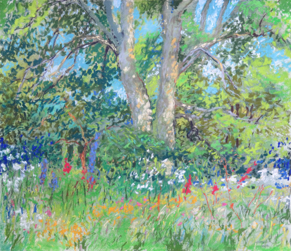 LS60: Majestic Sycamore with wild flowers beneath - 21st July 2020 by Simon Blackwood