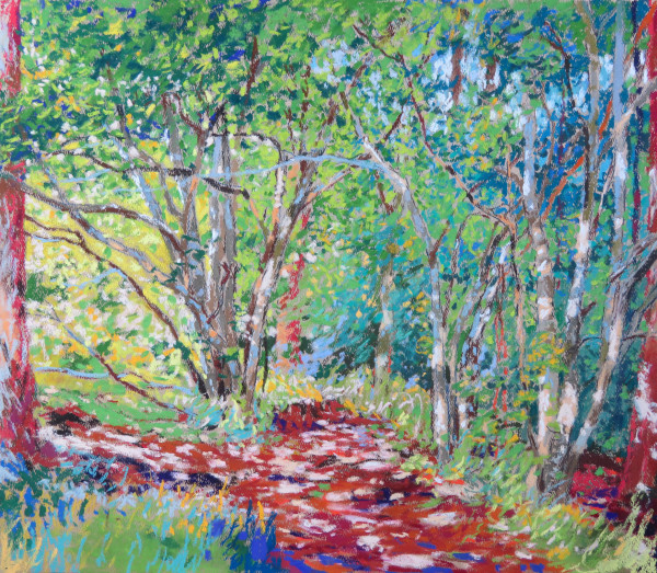 LS61: Hazel Trees by Scots Pine Wood - 23rd July 2020 by Simon Blackwood