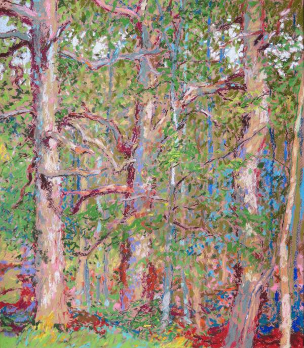 LS55: Three mature oaks - 12th July 2020 by Simon Blackwood