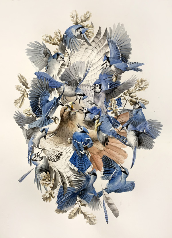Blue Jays by Jake Messing
