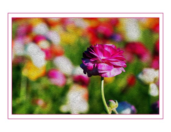 Surreal Pink Flowers (copy) by Bob Kahn
