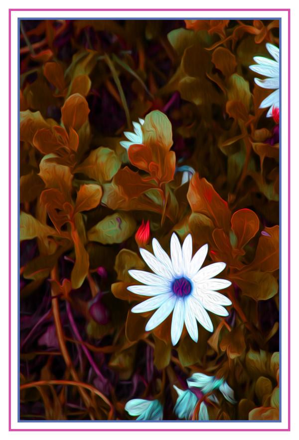 Single White flowers by Bob Kahn