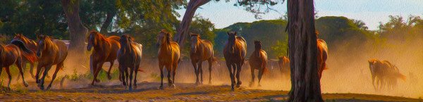 The Waldemar Herd by teak elmore