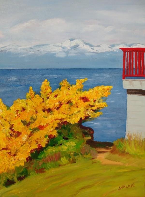 Blooming Broom by Jody Waldie