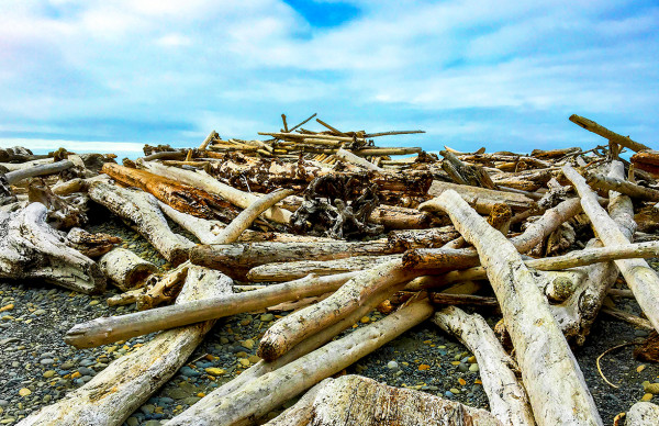 Driftwood Pile at Abbey Beach, Afternoon by Rodney Buxton