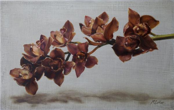 Cymbidium Orchids II by Narelle Zeller