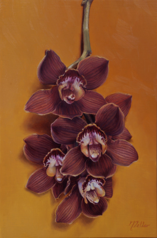 Cymbidium Orchids by Narelle Zeller