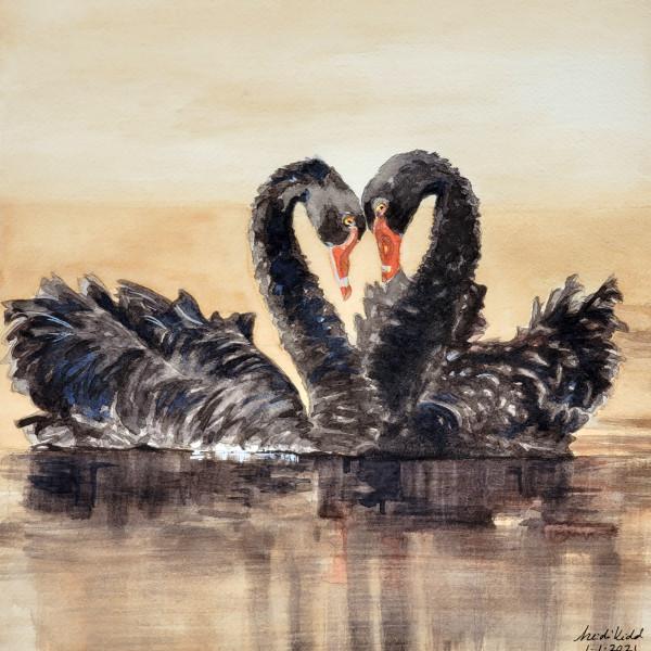Black Swans by HEIDI KIDD