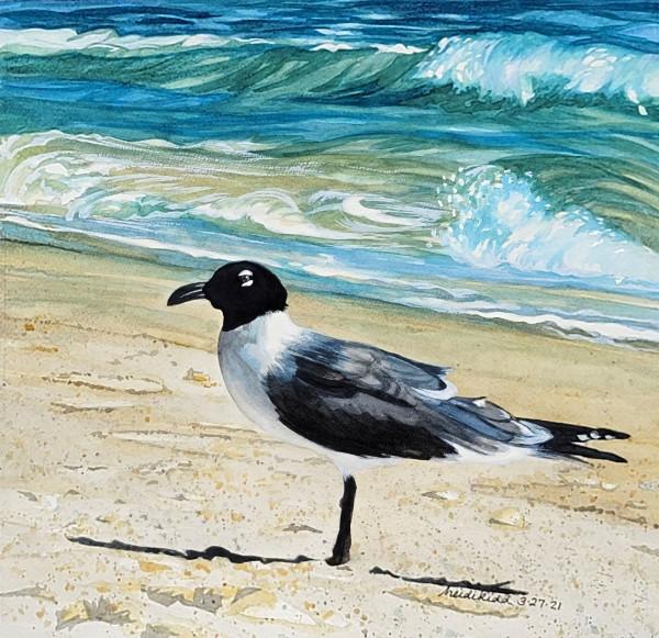 Laughing Gull by HEIDI KIDD