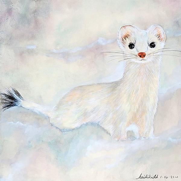Pan Ermine White Weasel by HEIDI KIDD