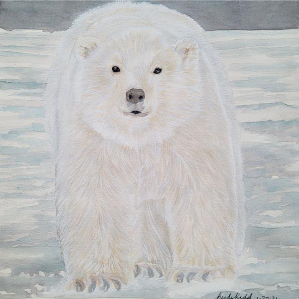 Polar Bear by HEIDI KIDD